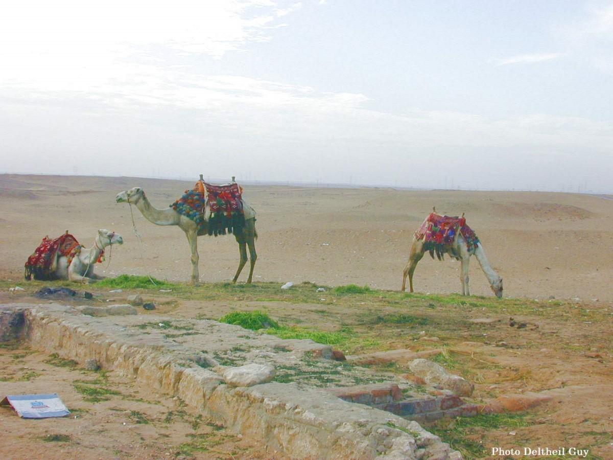 Egypt014