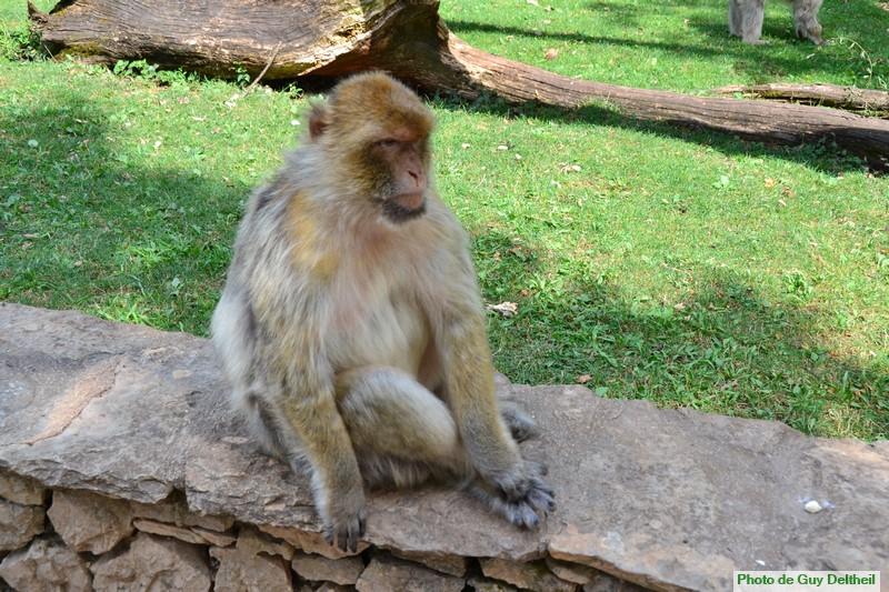 Forêt des singes-Rocamadour